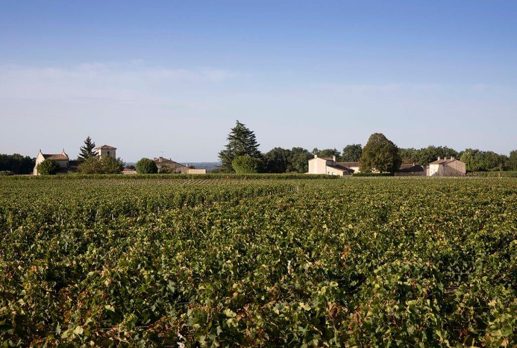 vue des vignes et du village de ferrand