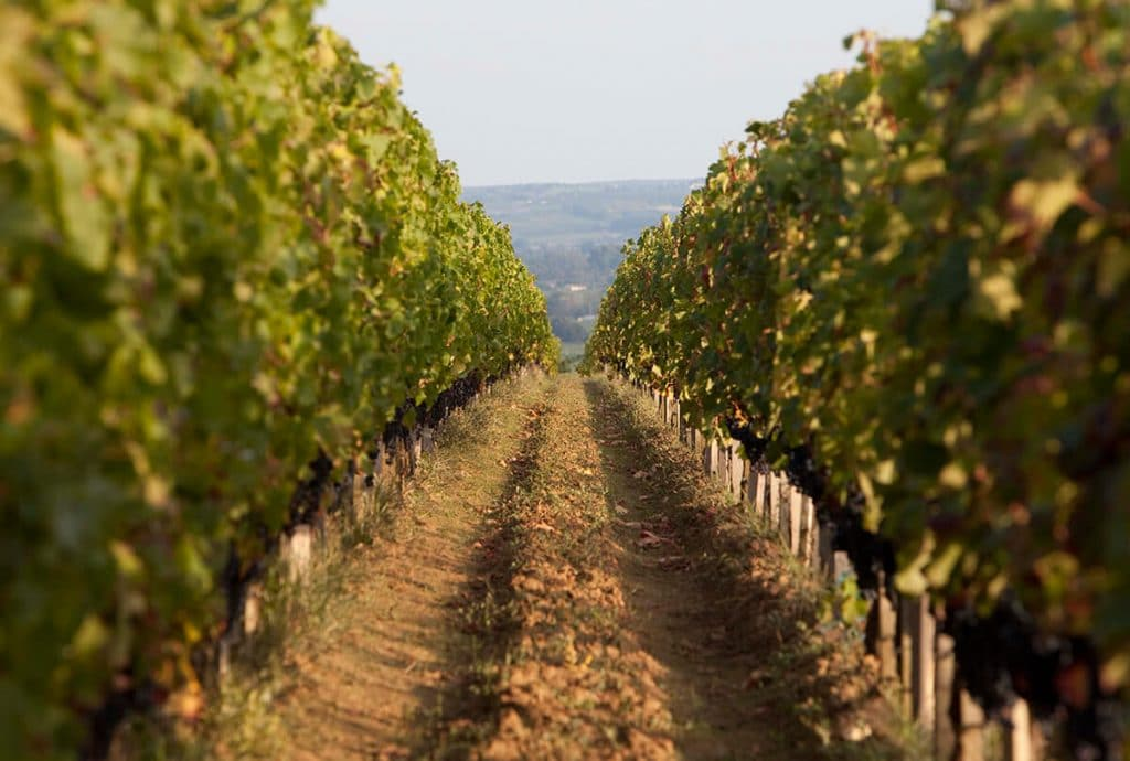 vue rang de vigne du chateau de ferrand